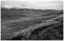 Tundra, Alaska Range, and Denali near Eielson. Denali National Park, Alaska, USA. (black and white)