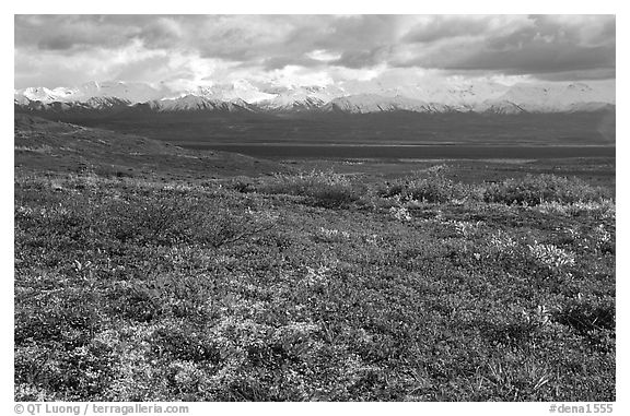 Tundra and Alaska Range near Wonder Lake. Denali National Park (black and white)