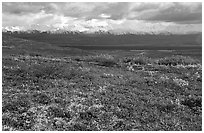 Tundra and Alaska Range near Wonder Lake. Denali National Park, Alaska, USA. (black and white)