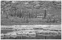 Pond, spruce trees and tundra near Wonder Lake. Denali National Park, Alaska, USA. (black and white)