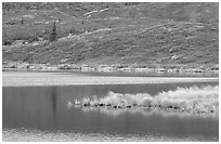 Tundra and Wonder Lake. Denali National Park ( black and white)