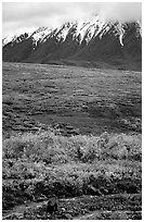 Grizzly bear and Alaska range. Denali National Park, Alaska, USA. (black and white)