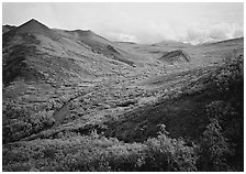 Gentle valley and river with low vegetation. Denali National Park, Alaska, USA. (black and white)