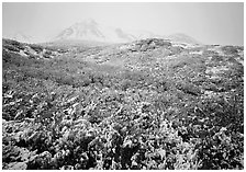 Fresh dusting of snow on autumn brush mountains in fog. Denali National Park ( black and white)