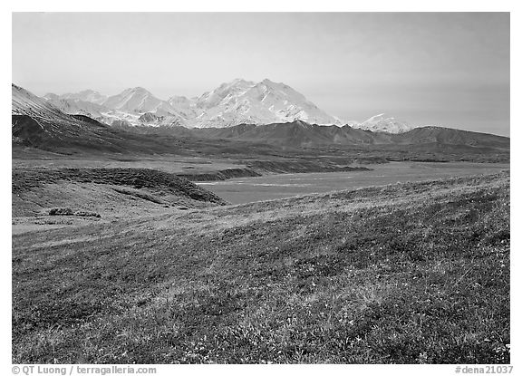 Tundra and Mt Mc Kinley from Eielson. Denali National Park (black and white)