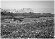 Tundra and Mt Mc Kinley from Eielson. Denali National Park, Alaska, USA. (black and white)