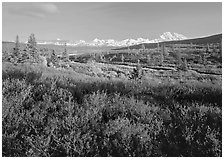 Tundra in autumn colors and snowy mountains of Alaska Range. Denali National Park, Alaska, USA. (black and white)