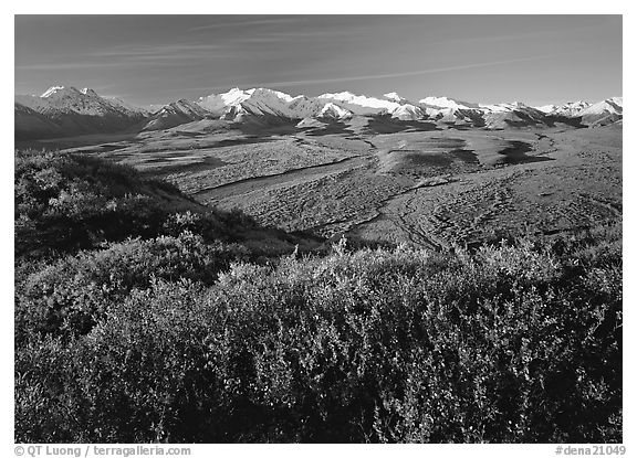 Alaska Range, braided rivers, and shrubs from Polychrome Pass, morning. Denali National Park (black and white)