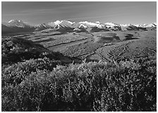 Alaska Range, braided rivers, and shrubs from Polychrome Pass, morning. Denali National Park ( black and white)