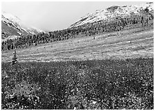 Fresh snow on tundra near Savage River. Denali National Park, Alaska, USA. (black and white)