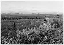 Autumn bushes, tundra, and Alaska range at dusk. Denali National Park, Alaska, USA. (black and white)