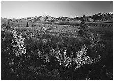 Tundra and mountain range near Savage River. Denali National Park ( black and white)