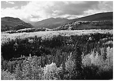 Aspens in fall colors and mountains near Riley Creek. Denali National Park, Alaska, USA. (black and white)
