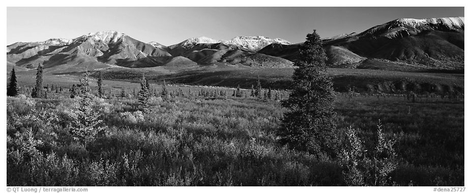 Tundra scenery with trees and mountains in autumn. Denali National Park (black and white)