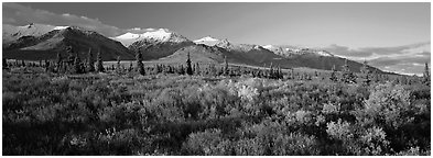 Tundra landscape. Denali National Park (Panoramic black and white)