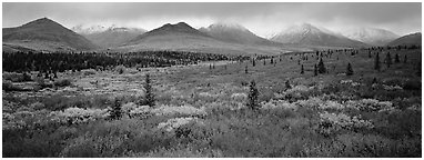 Mountain landscape with crimson tundra. Denali  National Park (Panoramic black and white)