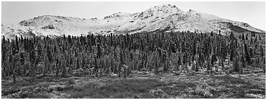 Boreal landscape with tundra, forest, and snowy mountains. Denali  National Park (Panoramic black and white)