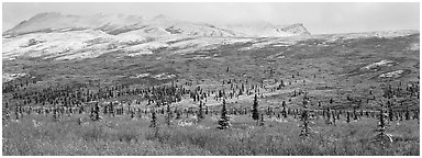Northern latitudes scenery in autumn. Denali National Park (Panoramic black and white)