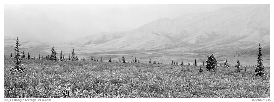 Misty mountain scenery with fresh snow on tundra. Denali National Park (black and white)