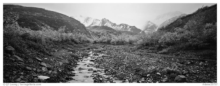 Rocky creek, trees, and snowy mountains in autumn. Denali National Park (black and white)