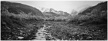 Rocky creek, trees, and snowy mountains in autumn. Denali National Park (Panoramic black and white)