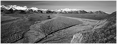 Alaskan scenery with wide braided rivers and mountains. Denali  National Park (Panoramic black and white)