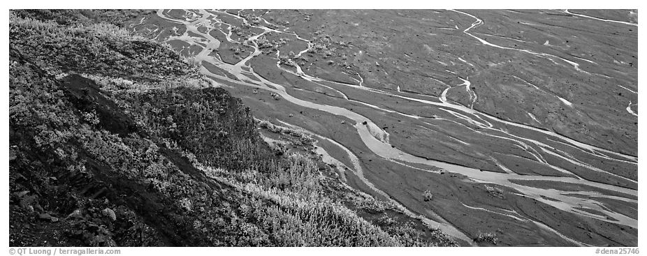 Wide braided river and aspens in autumn. Denali National Park (black and white)