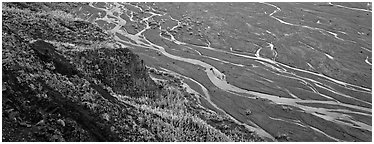 Wide braided river and aspens in autumn. Denali National Park (Panoramic black and white)