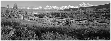 Seasons passing on the tundra. Denali National Park (Panoramic black and white)