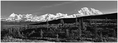 Tundra landscape with Mount McKinley. Denali  National Park (Panoramic black and white)