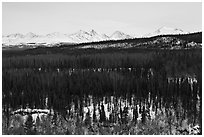 Bare forest in winter. Denali National Park, Alaska, USA. (black and white)