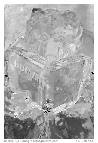 Ice sculpture of bear reading about humans. Denali National Park (black and white)