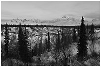 Alaska range and boreal forest in winter. Denali National Park, Alaska, USA. (black and white)