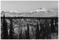 Alaska range peaks rising above forest at sunrise. Denali National Park ( black and white)