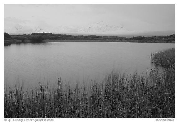 Mt McKinley in the fog from Reflection pond, dawn. Denali National Park (black and white)