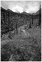 Berry plants in fall color and Arrigetch creek. Gates of the Arctic National Park, Alaska, USA. (black and white)