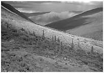 Arrigetch valley with caribou. Gates of the Arctic National Park, Alaska, USA. (black and white)