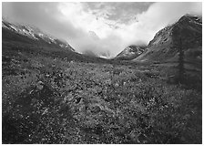 Arrigetch Peaks, tundra in fall colors, and clearing storm. Gates of the Arctic National Park ( black and white)