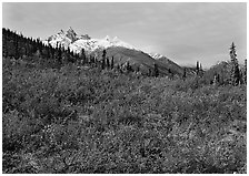 Red tundra shrubs and Arrigetch Peaks in the distance. Gates of the Arctic National Park, Alaska, USA. (black and white)