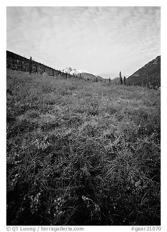 Tundra tussocks and Arrigetch Peaks in the distance. Gates of the Arctic National Park (black and white)