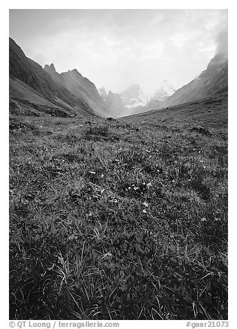 Low tundra in autum color and Arrigetch Peaks. Gates of the Arctic National Park (black and white)