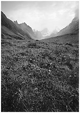Low tundra in autum color and Arrigetch Peaks. Gates of the Arctic National Park ( black and white)