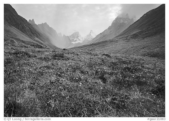 Tundra and Arrigetch Peaks. Gates of the Arctic National Park (black and white)