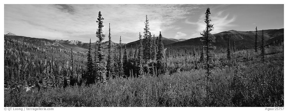 Mountain landscape with berry plants in fall colors, forest, and snow-dusted peaks. Gates of the Arctic National Park (black and white)
