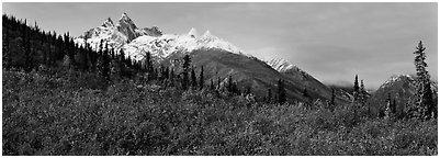 Taiga landscape in the fall. Gates of the Arctic National Park (Panoramic black and white)