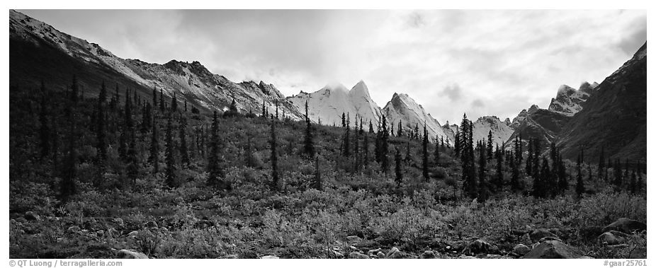 Taiga forest and peaks with fresh dusting of snow. Gates of the Arctic National Park (black and white)