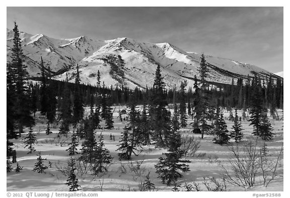 Boreal forest and brooks range in winter. Gates of the Arctic National Park (black and white)