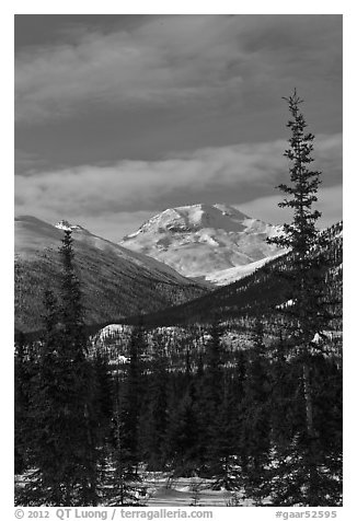 Forest and snowy Brooks Range mountains. Gates of the Arctic National Park (black and white)