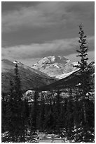 Forest and snowy Brooks Range mountains. Gates of the Arctic National Park, Alaska, USA. (black and white)