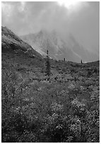 Tundra and Arrigetch Peaks in fog. Gates of the Arctic National Park, Alaska, USA. (black and white)